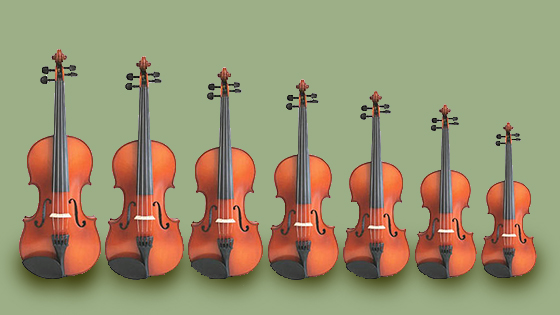 fiddle family
