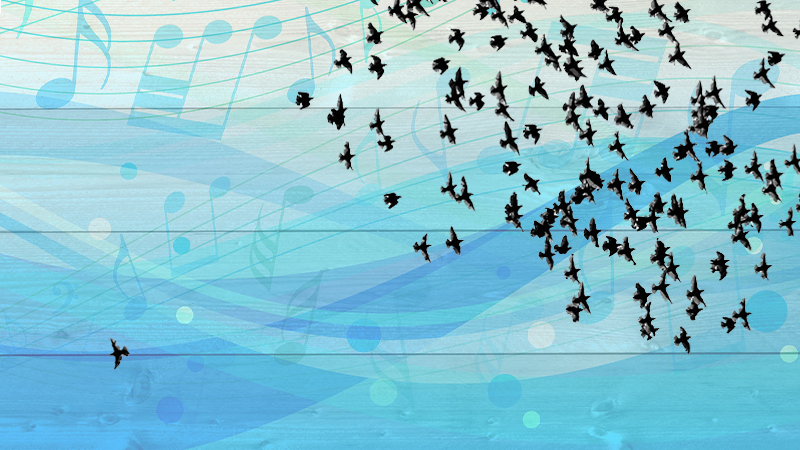 Orchestra Playing: Flying as One with the Flock