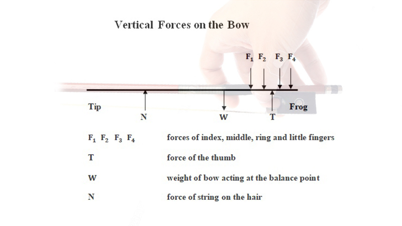 Physics and the Bow: Forces of Fingers and Thumb