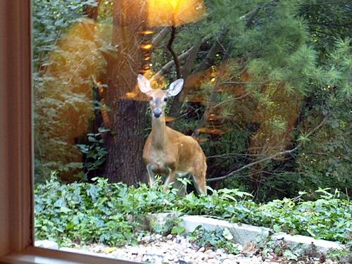 Do Re Me Fa Sol La Ti...Doe, a Deer!